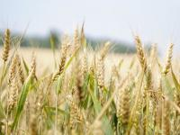 Grain futures market update